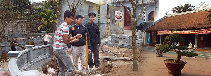 Dự án trồng cây xanh Đình Hoàng Mai
